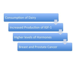 How dairy promotes cancer