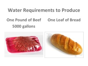 Comparison of water required to produce one pound of beef vs one loaf bread